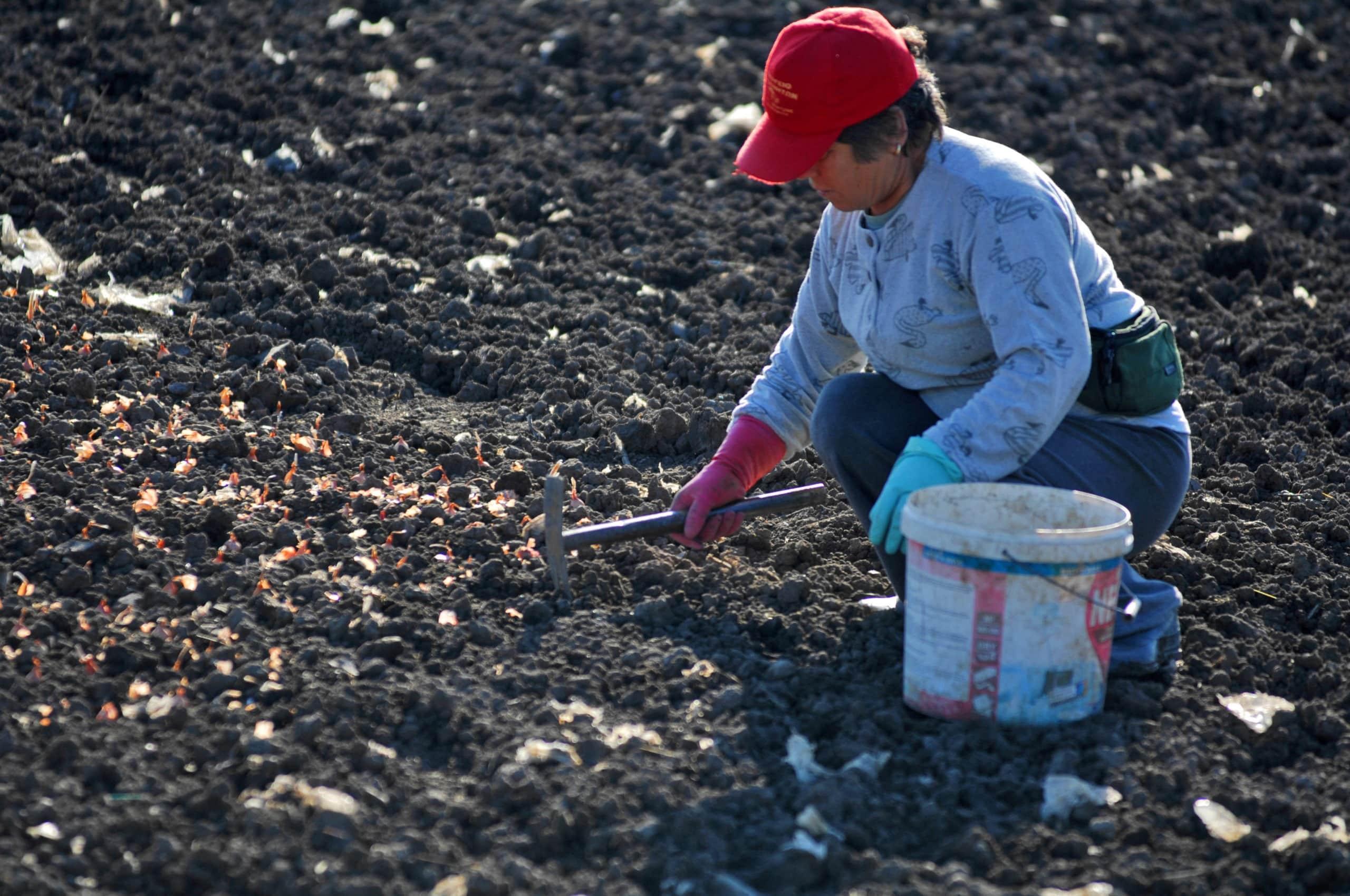 ΟΠΕΚΕΠΕ Πληρωμές ΟΠΕΚΑ Προνοιακά επιδόματα πληρωμή Δεκεμβρίου Πολύτεκνες αγρότισσες: Πότε πληρώνει το επίδομα €1.000 ο ΟΠΕΚΑ