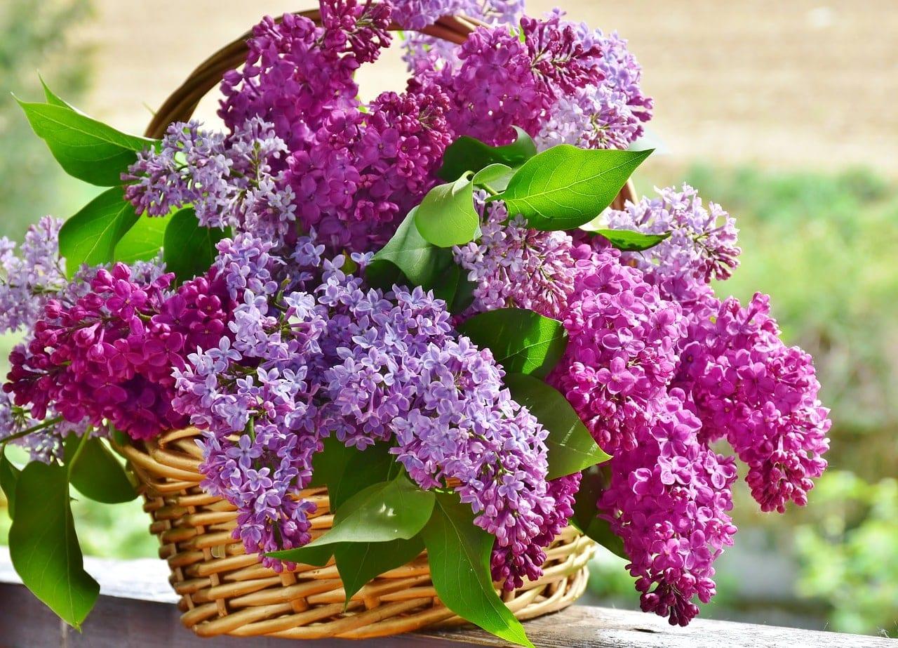 Τι γιορτή είναι σήμερα Δευτέρα 2 Νοεμβρίου 2020 Εορτολόγιο Ποιοι γιορτάζουν στις 2/11 - Βρείτε και στείλτε ευχές για την ονομαστική εορτή
