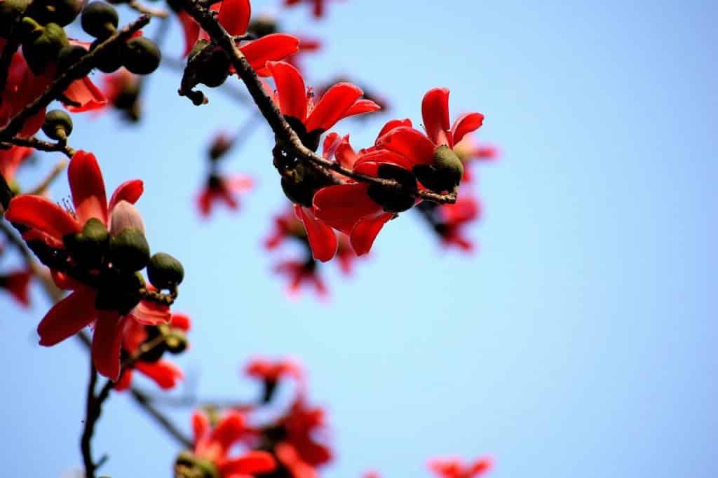 Γιορτή σήμερα 12 Μαρτίου Ποιοι γιορτάζουν 12/3 Εορτολόγιο Καιρός